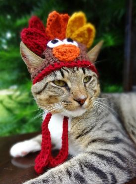 Not one of my cats but this was too cute and my boys will NOT let me put hats on them....Happy Turkey Day!