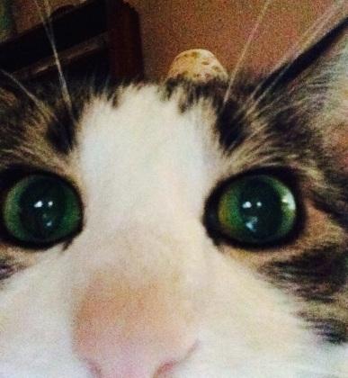 Tipper's first selfie