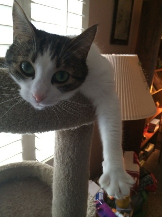 Tipper hangin' in his cat tree