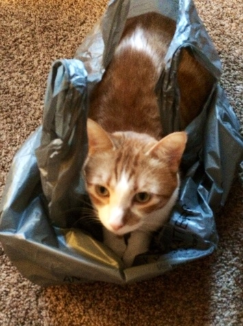 """The Biscuit"" in his bag.  One happy kitty cat."