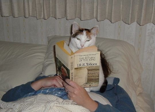 Were you reading that book?