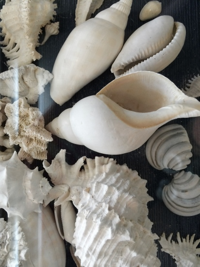 Every table is a virtual shell extravaganza!