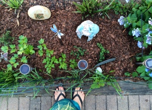 Last, but not least, the start of my herb garden.  No basil for sale yesterday but added flat leaf parsley, lemon thyme  and rosemary to the chives and garlic chives already up. (not shown - cilantro which I've planted in it's own pot this year) And yes, I purposely included my feet in this picture.
