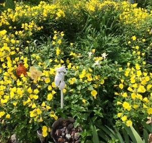 Buttercups - this flowerbed is awash in yellow