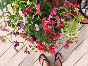 Nicotania - and check out my electric blue pedicure