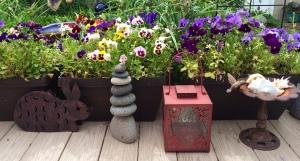 Pansies still in bloom