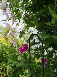 Clematis & Sweet Pea