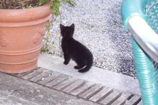 A French kitten in the garden