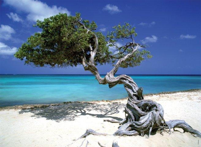 ori-puzzle-mer-plage-divi-divi-tree-500-pieces-collection-evasion-nathan-87118-tom-mackie-6829