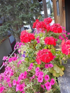 Flower boxes at our B&B