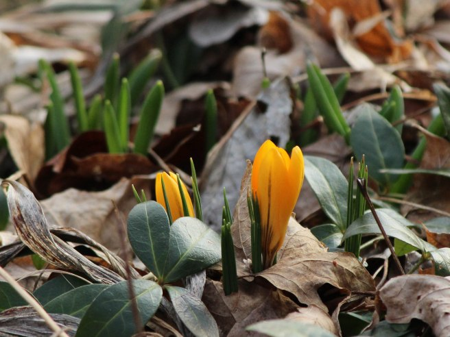 Early_Spring_06