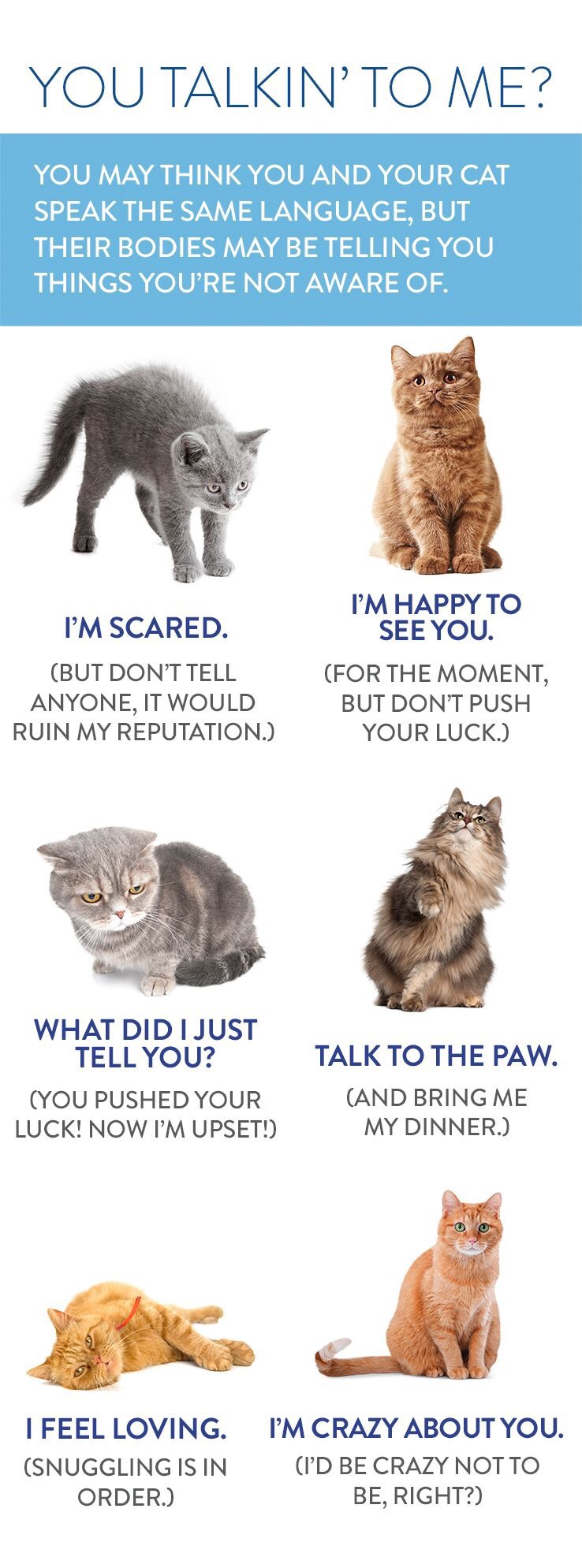 HOW TO SPEAK CAT THE ESSENTIAL PRIMER OF CAT LANGUAGE BY ALEXANDRA SELLERS 11/16