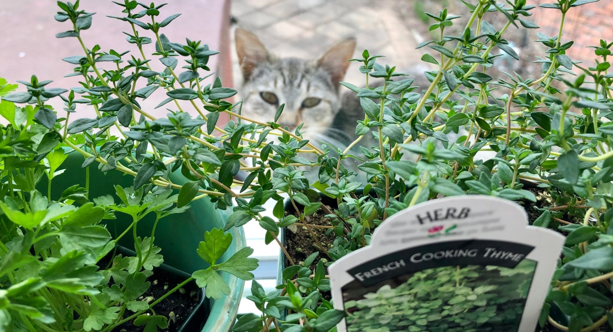 Kitten and the Herbs